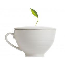 Tea Forté - Tasse sans emballage